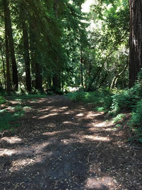 jazz camp woods